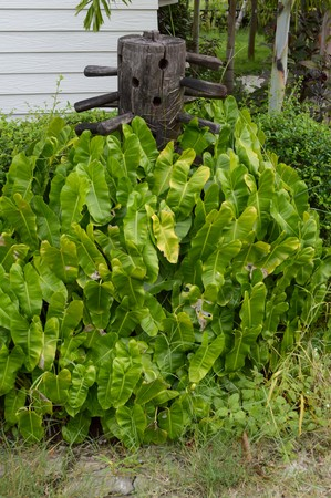 green philodendron leaves in nature garden