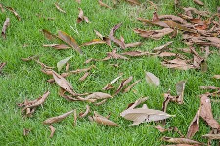 dry leaves on green grass in garden