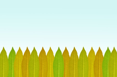 green leaves on blue illustration background