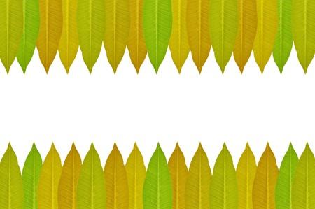 leaves frame: green leaves frame on white background