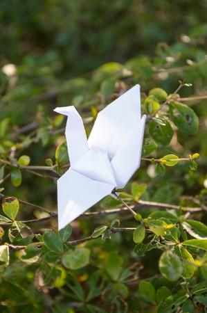 animal limb: bird paper on green leaves
