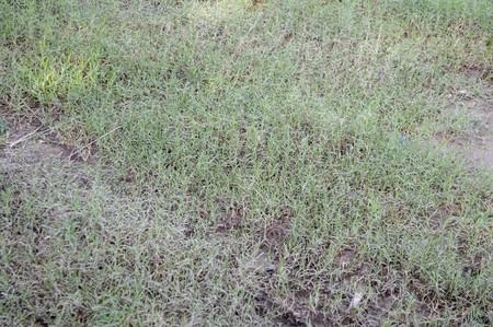 green grass on the ground in garden