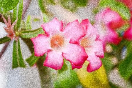 grunge image: art grunge image pink Adenium obesum flower in garden