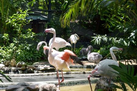 flamingo bird in the zoo 版權商用圖片 - 46881514