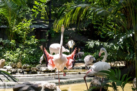 flamingo bird in the zoo 版權商用圖片 - 46881515