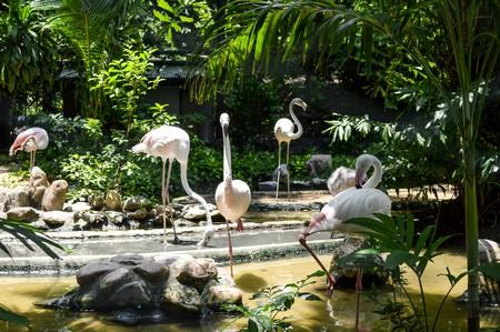 flamenco ave: Flamingo ave en el zoo