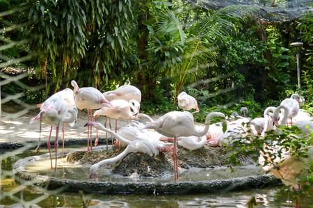flamenco ave: dispararon cerca de pájaro del flamenco en el parque zoológico