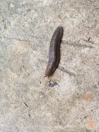 slug: Slug on cement floor Stock Photo