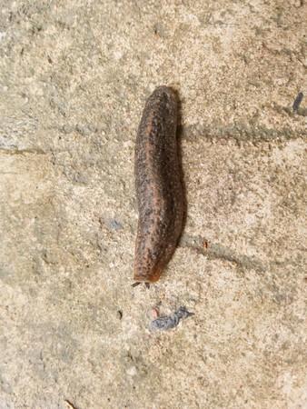 slug: Slug en el piso de cemento