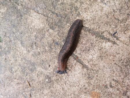 Slug on cement floor Reklamní fotografie