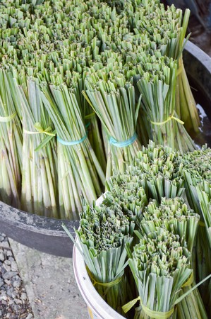 lemongrass: green lemongrass on black enamelware