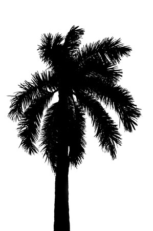 Black silhouette of single coconut palm tree isolated on white background