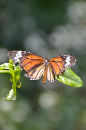 animal limb: Butterfly on green branch in the garden Stock Photo