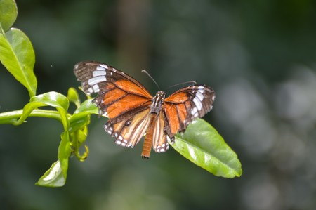 Butterfly on green branch in the garden Imagens