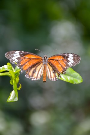 animal limb: Butterfly on green leaves in nature garden Stock Photo