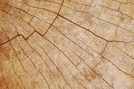grunge brown wood texture background