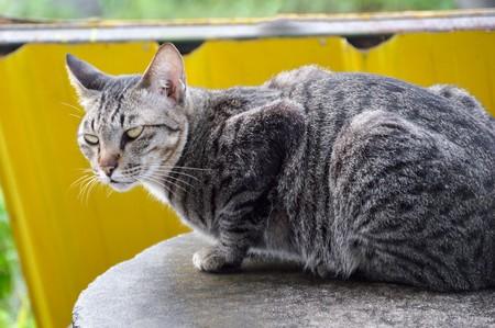gato atigrado: tabby cat on cement floor
