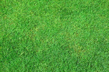 untidy: green grass in nature garden Stock Photo
