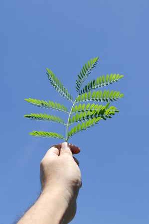 green leaves on man hand Stock Photo