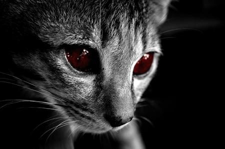 ojos negros: blanca del gato y el negro tienen los ojos rojos