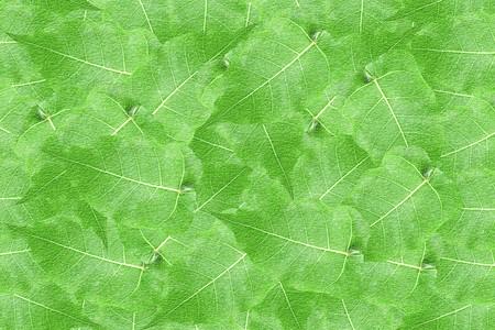 rugged: art green leaves pattern illustration background