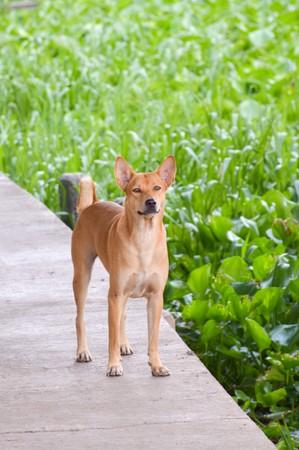 cute asia dog