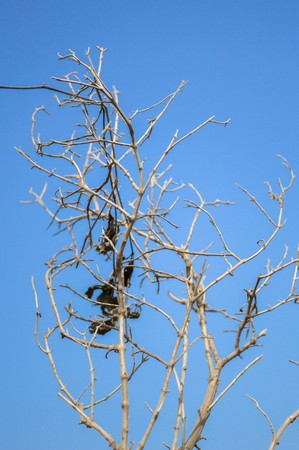 toter baum: dry branch dead tree on blue sky