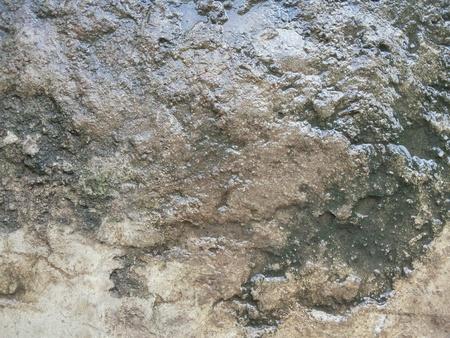rough: Wet cement floor