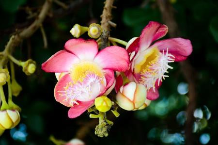 Sal flower in garden Stock fotó