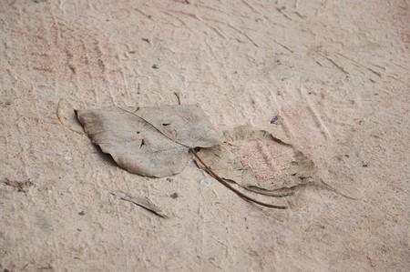 dry leaves on sand floor