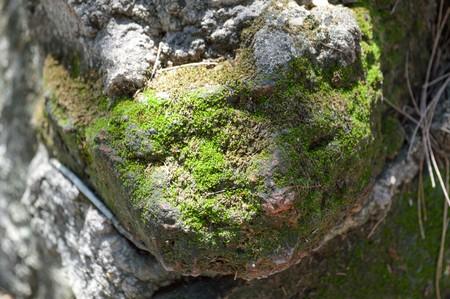 daylight: Moss Stone Daylight Stock Photo