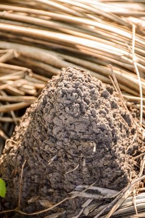 anthill: dry anthill in garden Stock Photo
