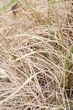 dry grass: dry grass on the ground Stock Photo