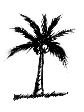 coconut tree illustration