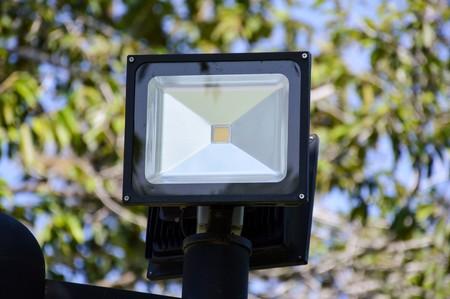 spotlight: Spotlight in nature garden