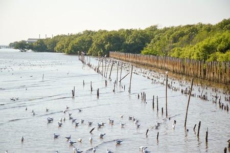 Seagull bird at Bang Pu beach, Thailand Banco de Imagens - 50569217