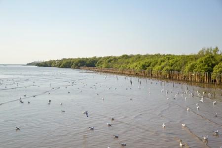 Seagull bird at Bang Pu beach, Thailand Banco de Imagens - 50821344