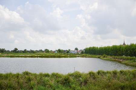 fish pond in country Thailand Imagens