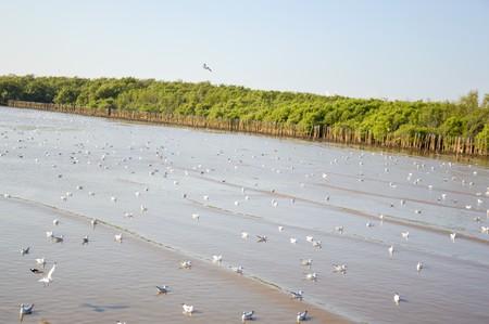 Seagull bird at Bang Pu beach, Thailand Banco de Imagens - 50821494