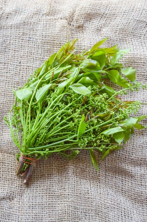 neem: Neem leaves on old fabric - Azadirachta indica Stock Photo
