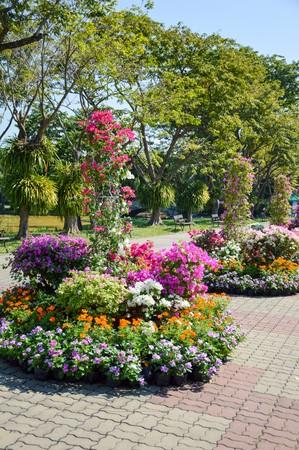 colorful flower in nature garden Thailand