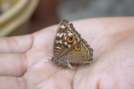 die butterfly on hand