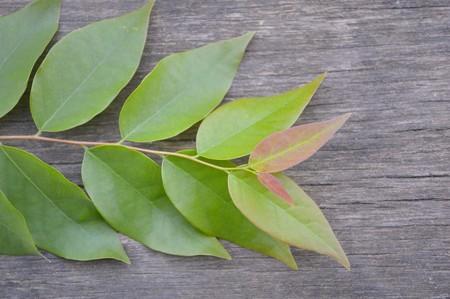 on wood floor: green star gooseberry leaves on wood floor