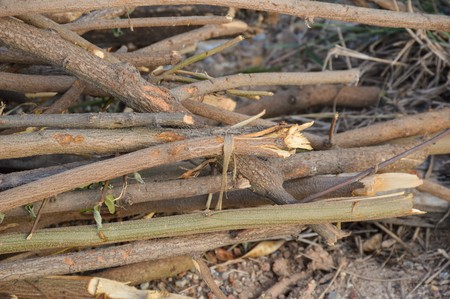 deforested: deforested cut tree wood in forest Stock Photo