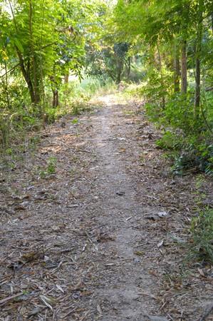 walkway nature in Nakhon nayok , Thailand