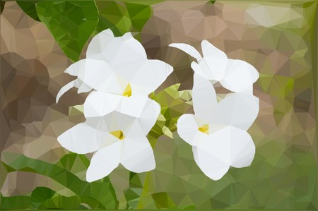 plumeria flower: Low polygon plumeria flower Stock Photo