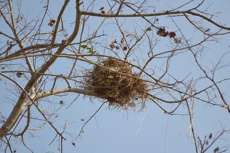 animal limb: bird net on dry branch