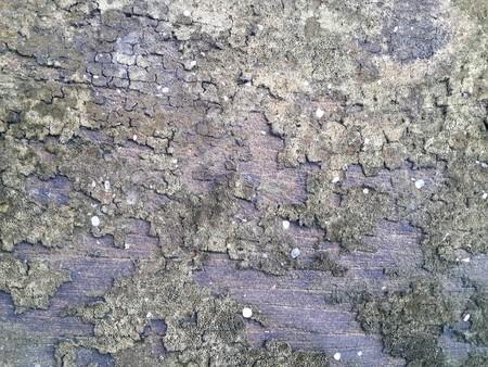 lichen: dry lichen on old wood plank texture