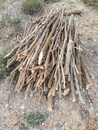 deforested: deforested cut tree wood in garden