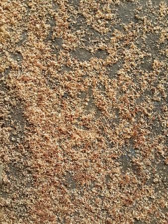 sciure de texture
